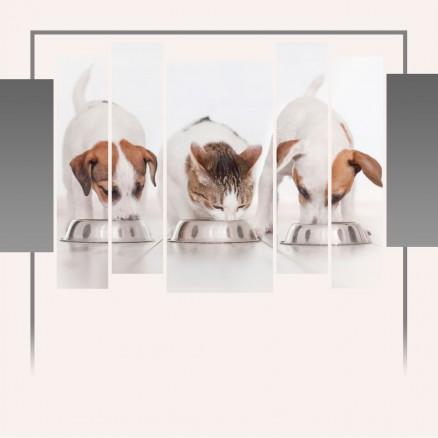 Миски для собак и котов. Формы, материалы и новшества