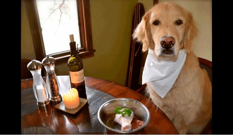 10 заповедей кормления собаки